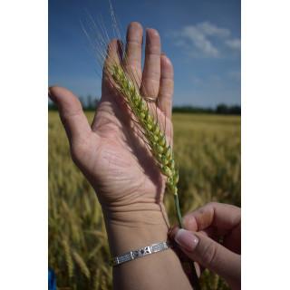 Прайс на озиму пшеницю