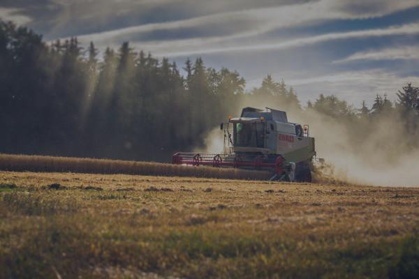 Заходи по догляду за посівами озимої пшениці